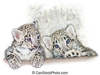 Snow leopard babies - Snow leopard (Uncia uncia) cubs