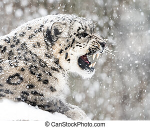 Snow Leopard In Snow Storm II