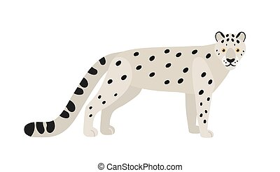 Snow leopard or ounce isolated on white background. Gorgeous...