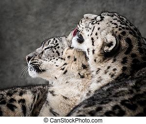 Snow Leopard Pair II