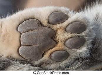 Snow leopard print Images, Vectors & Stock Photos | Can ...