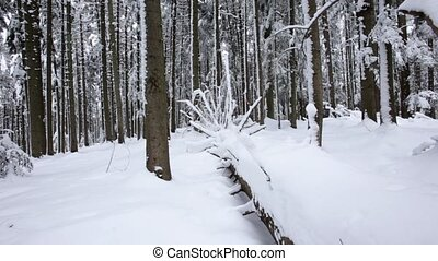 Snow lies on the paths in the coniferous forest. Dolly shot. Slow motion. Close up