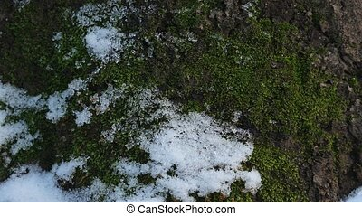 Snow melting closeup