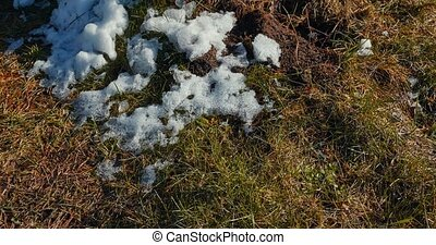 Melting snow on the grass