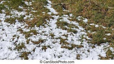 Melting snow timelapse on the grass