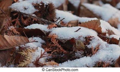 Snow melting closeup