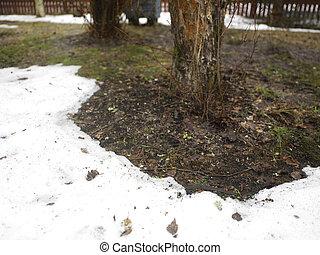 Snow Melting In Garden