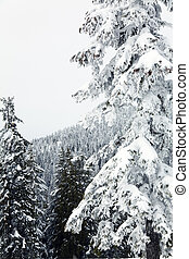 snow mountain, winter landscape in canada vancouver
