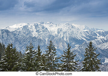 Snow mountains and pine trees