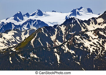 Snow Mountains Hurricaine Ridge Olympic National Park Washington State Pacific Northwest Closeup Evergreen