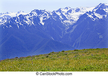 Snow Mountains Hurricaine Ridge Olympic National Park Washington State Pacific Northwest Wildflowers Green Valleys Ridge Line