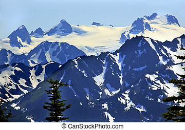 Snow Mountains Hurricane Ridge Olympic National Park Washington State Pacific Northwest Closeup Evergreen