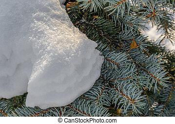 Snow on a Fir Branch