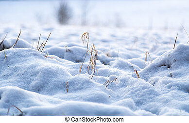 Snow on a meadow in winter macro