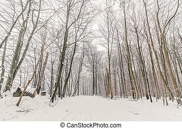 Snow on a road in the forest