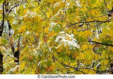 Snow on autumn leaves