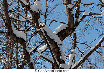 snow on branches against the blue sky