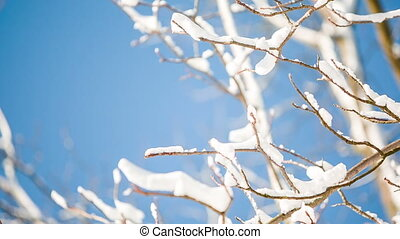 snow on branches in winter