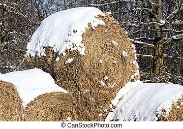Snow on Hay Bales