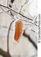 Snow on leaf