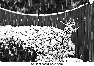 Snow on Shrub and Fence BW