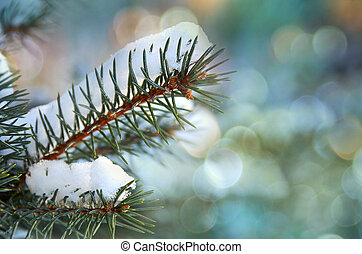snow on spruce - Blue spruce branch covered in snow with...