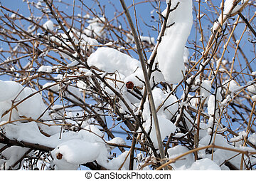 snow on the bare branches of a tree