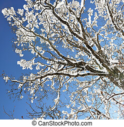 Snow on the branch