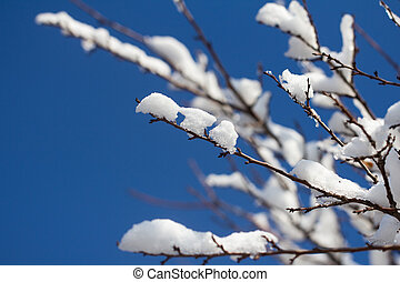 Snow on the branches of a tree against a blue sky