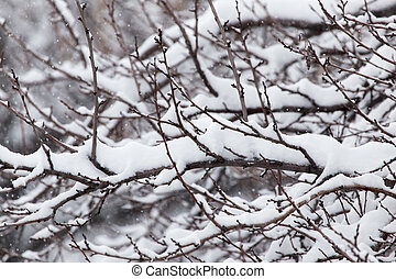 snow on the branches of a tree in nature