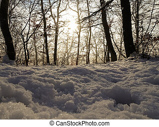 snow on the forest floor while walking in the winter
