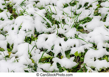 snow on the green grass fell in the spring