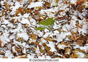 Snow on the pile of leaves.