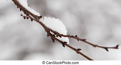 Snow on the tree in nature