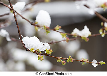 Snow on the trees in spring colors