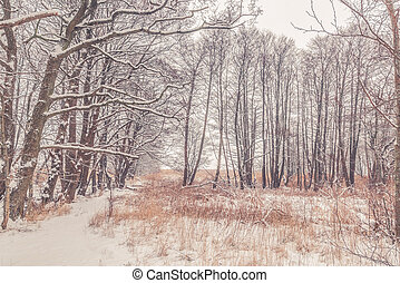 Snow on tree branches in the forest