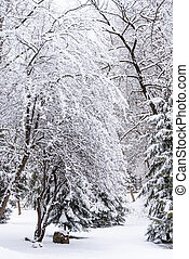Snow on tree branches in the winter forest