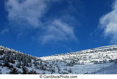 Snow on trees 1