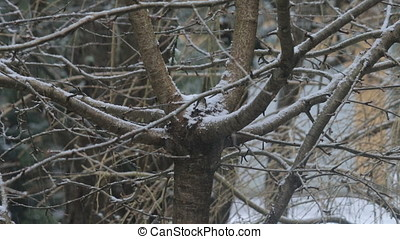 snow on winter tree