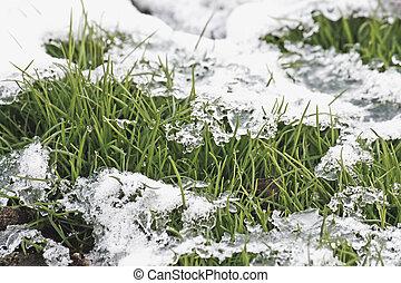snow., pastvina, pod
