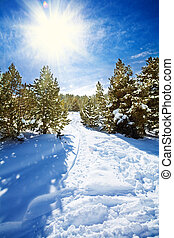 Snow path in snowy mountain forest with pines and spruce...