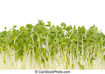 Snow Pea Sprouts ,vegetable background