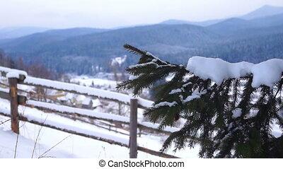 Snow pines winter mountain