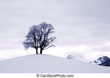 Isolated silhouette of a pair of trees on a snow covered ridge.