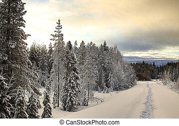 Snow road with footsteps in Vasterbotten, Sweden