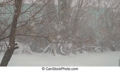 Snow slowly falling on background of trees