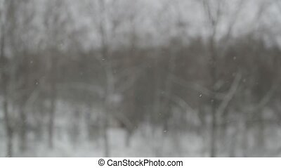 snow slowly falls on a blurred background.