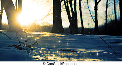 Snow sparkling in the rays of the setting sun