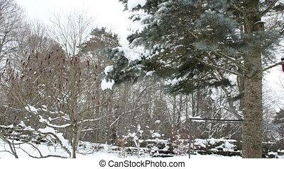 snow spruce tree winter