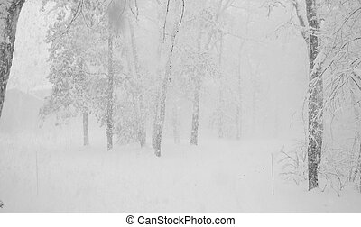 Snow Storm - A Midwestern snow storm blankets the region.